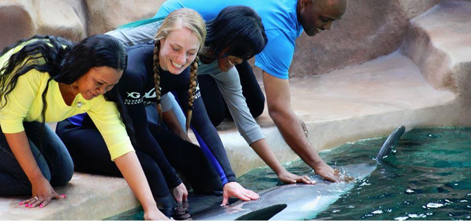 ATL dolphin